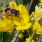 魂を浄化させる詩「蜂と神様」