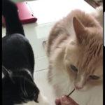 【注意!】使ってはいけない猫にアロマ