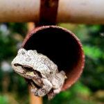 【お香の歴史】織田信長に危険を知らせたカエルの香炉