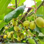 実は果物で作る金運アップのお香がある!